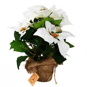 Mākslīgie ziedi punsetijas