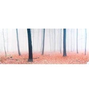 Fotoglezna WALD VOLL NEBEL 50x1125cm