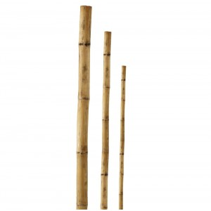 Mietiņš bambusa 60cm 1gb(20)